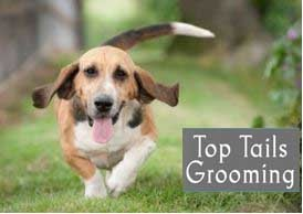 Top Tails Grooming Room & Self Service Dog Wash